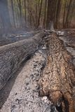 Burnt forest scene. Stock Photos
