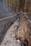 Burnt forest scene.
