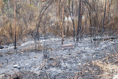 Burnt Forest Royalty Free Stock Photo