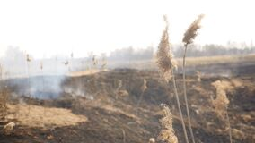 Burnt grass on the field. Ecological catastrophe. Human factor. Special arson