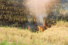 Burnt grass in the field after the fire. Close up. Stock Photo