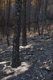Burnt krajobraz Zdjęcie Stock