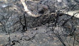 Burnt krajobraz Zdjęcia Stock