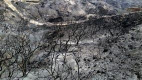 Burnt krajobraz Zdjęcia Royalty Free