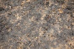 Burnt land Royalty Free Stock Photos