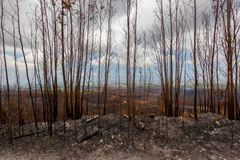 Burnt landscape with dry dead leafless trees stock photos