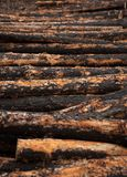 Burnt logs Stock Images