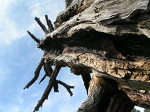 Burnt out tree. View inside burnt tree against the sky Royalty Free Stock Photo