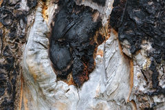 Burnt pine surface Royalty Free Stock Photography