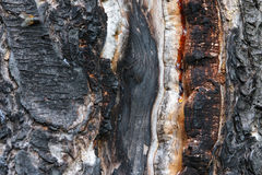 Burnt pine surface Stock Photo