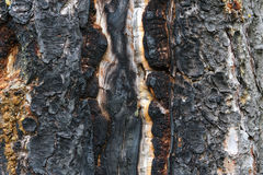 Burnt pine surface Royalty Free Stock Photo