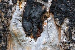 Burnt sosny powierzchnia Fotografia Royalty Free