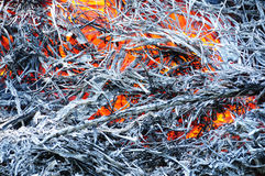 Burnt straw Stock Images