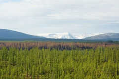 Burnt taiga on the background of snowy mountains, BAM Royalty Free Stock Photos