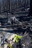Burnt Timber Stock Image