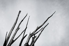 Burnt tree against the sky Royalty Free Stock Photography