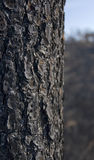 Burnt tree bark Stock Photo
