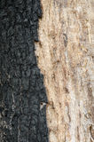 Burnt tree bark Royalty Free Stock Photo