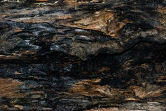 Burnt tree bark texture as background Royalty Free Stock Photos