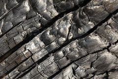 Burnt tree. Close-up of abstract textures of a burnt tree after a forest fire Stock Photography
