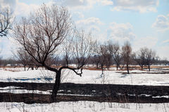 Burnt tree and grass coming out of melting snow Stock Photos