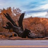 Burnt tree beside a road after the Lilac Fire. Burnt tree lying dead on the ground beside the road. Behind the tree is a devastated terrain ruined by the Lilac royalty free stock photos