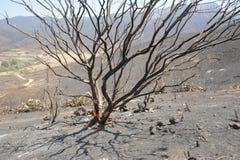 Burnt Tree at Satwiwa Royalty Free Stock Photos