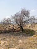 Burnt tree on a site with hardly any vegetation stock images