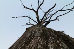 Burnt tree. Sky and tree Stock Photo