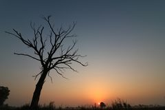 Burnt tree and the sun. Sunshine outdoor in italy Royalty Free Stock Image