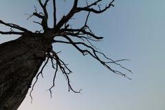 Burnt tree. Tree sunrise burnt Stock Photos
