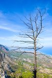 Burnt tree on the top of the Kyrenia mountain range taken from the Saint Hilarion Castle with beautiful Cypriot landscape. And Mediterranean coast in the royalty free stock photo