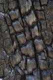 Burnt tree trunk. Close-up of a charred tree trunk burned by a recent bushfire at Blackdown Tableland National Park Royalty Free Stock Image