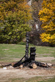 Burnt tree trunk Royalty Free Stock Photography