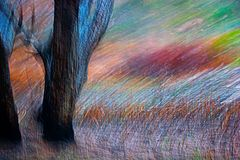 Burnt tree trunks in grassland. Abstract of burnt tree trunks in grassland. The wind is blowing through the grasses Stock Photo