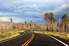 Burnt trees along the way to Grand canyon Stock Photo