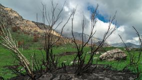 Burnt trees after a fire in the spring mountains in California in timelapse 4K stock video
