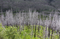 Burnt trees Stock Photos