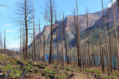 Burnt trees in Glacier. Burnt trees from a fire contrast with a blue lake in Glacier National Park, Montana Royalty Free Stock Images