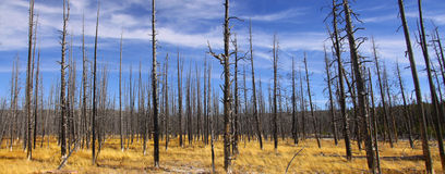 Burnt trees landscape Royalty Free Stock Photo