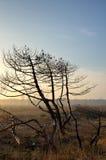 Burnt trees Royalty Free Stock Photo