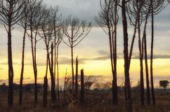 Burnt trees. Landscape of forest burned by fire in dante's beach, italy Royalty Free Stock Photos