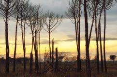 Burnt trees Royalty Free Stock Photos