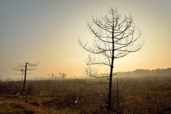 Burnt trees Stock Photo