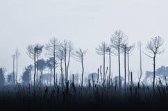 Burnt trees Royalty Free Stock Image