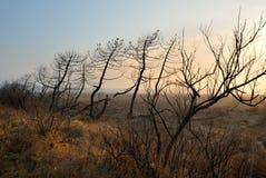 Burnt trees Stock Photography
