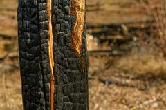Burnt trees on mountain after wildfire. Charred tree trunks and remains after a devastating wildfire stock image