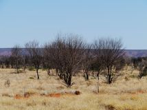 Burnt trees in the West Mcdonnell ranges Stock Images