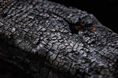 Burnt trunk royalty free stock image