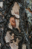 Burnt trunk reborn Royalty Free Stock Photo